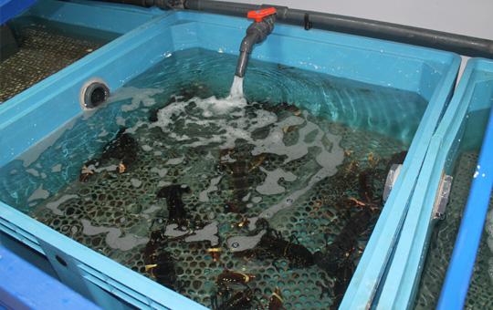 Pescados y mariscos rodriguez venta de pescado al for Piscina francos rodriguez